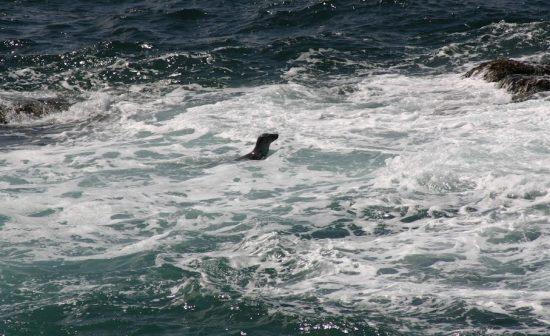 Cornwall Seal Videos